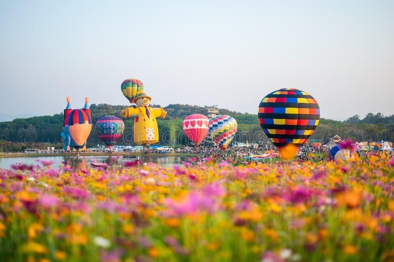 Turistas que viajam no festival colorido dos balões no campo do cosmos foto de stock royalty free