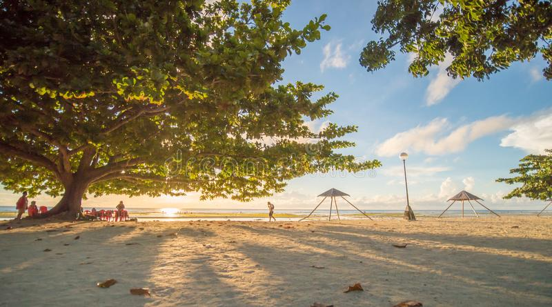 Turistas sob uma grande árvore de vida decíduo com folhas vermelho-verdes Os raios do sol da manhã através das folhas da imagens de stock royalty free