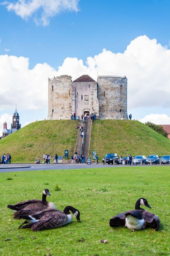 Turistas y fauna delante de la torre de Clifford, York, Inglaterra imagen de archivo
