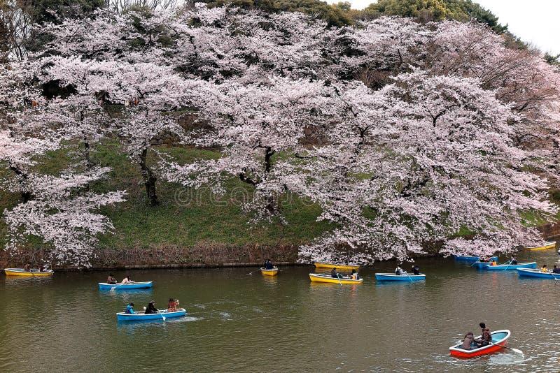 Turistekor på en sjö under härliga träd för körsbärsröd blomning i Chidorigafuchi Urban parkerar under Sakura Festival i Tokyo arkivbilder