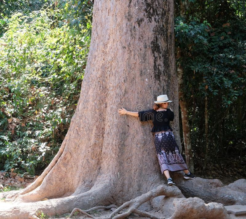 Turisten i en vit hatt försöker att sätta hennes armar runt om stammen av ett enormt träd fotografering för bildbyråer