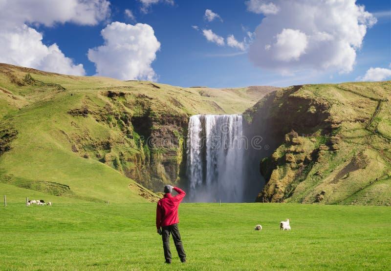 Turisten ser den Skogafoss vattenfallet i Island royaltyfri foto