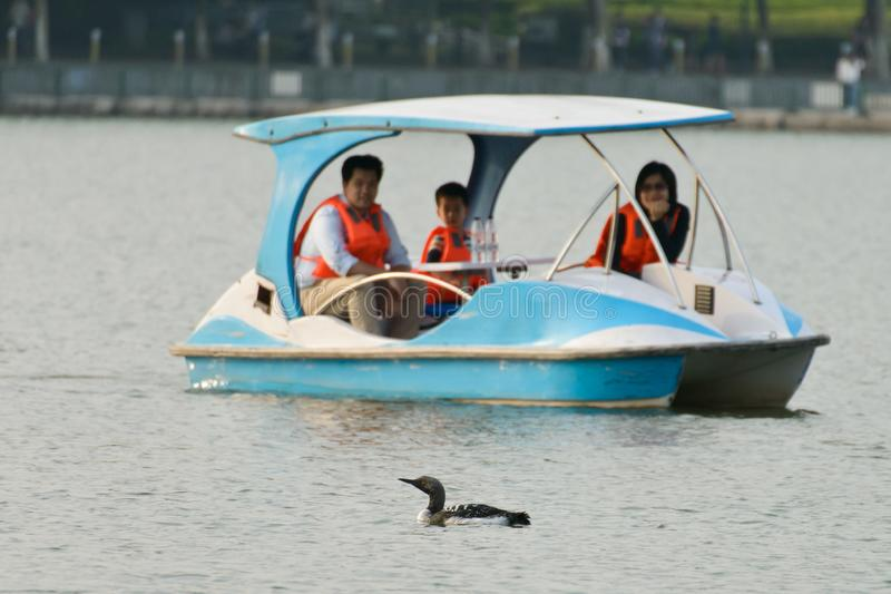 Turister i ett fartyg som håller ögonen på en fågel royaltyfria foton