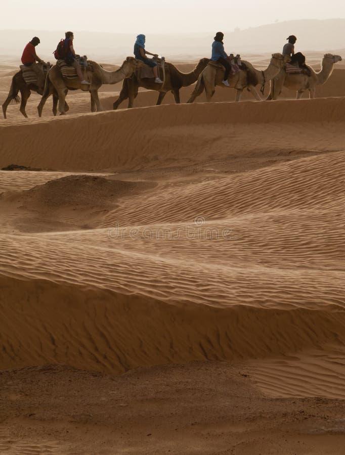 Turister på dromedar, Sahara, Tunisien royaltyfria bilder