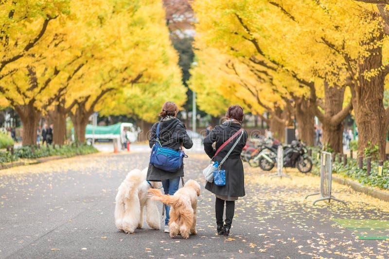 Turister på Meiji Jingu Gaien i Tokyo, Japan royaltyfria foton