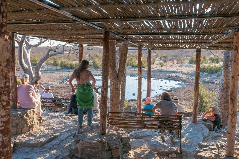 Turister på Moringaen Waterhole på Halali fotografering för bildbyråer