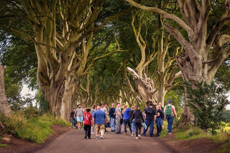 Turister som besöker de mörka häckarna i nordligt - Irland royaltyfria bilder