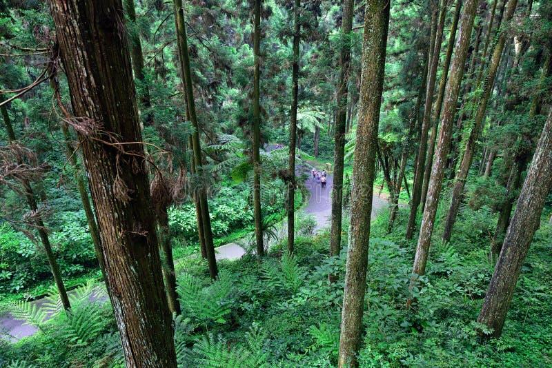 Turister som går i skogen arkivbilder