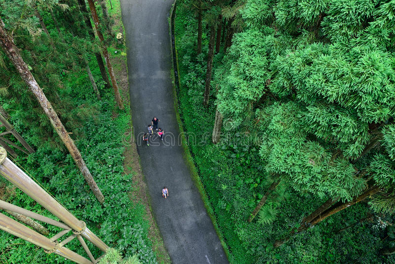 Turister som går i skogen royaltyfri foto