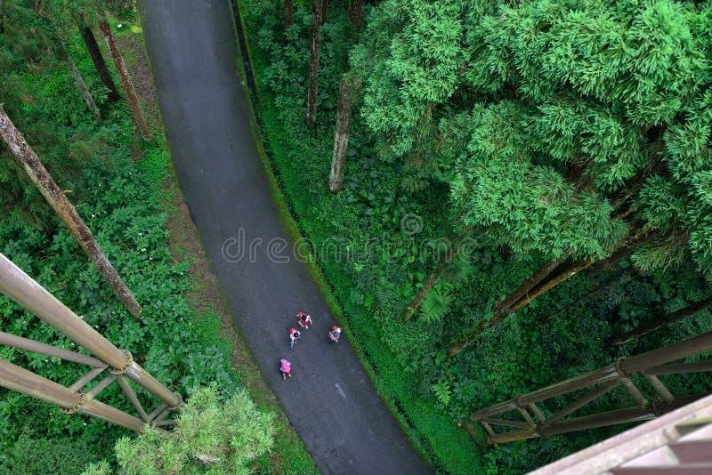 Turister som går i skogen royaltyfri fotografi