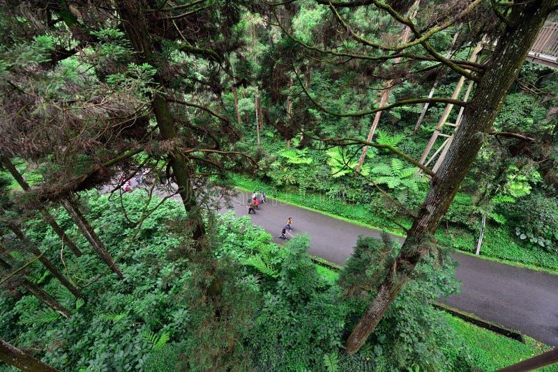 Turister som går i skogen arkivfoton