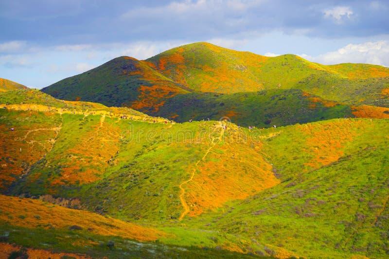 Turister som går till och med färgrika orange kullar av vallmo i Kalifornien under toppen blom royaltyfri bild
