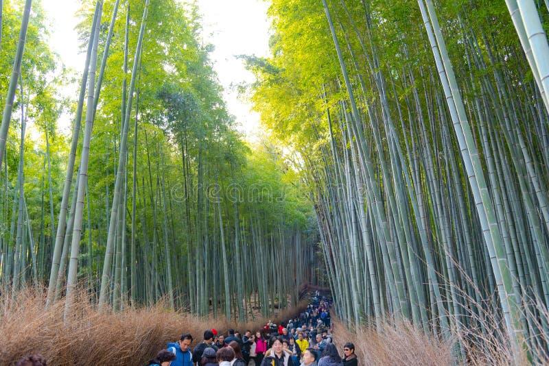 Turister som g?r till och med tr?dg?rd f?r Zen f?r Arashiyama bambudunge royaltyfri bild