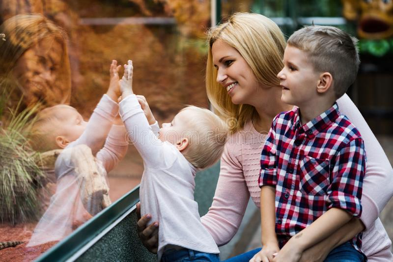 Turister som håller ögonen på krypet i terrarium på zoo royaltyfri fotografi