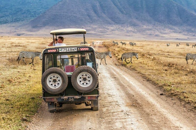 Turister som håller ögonen på sebror i den Ngorongoro krater, Tanzania arkivfoton
