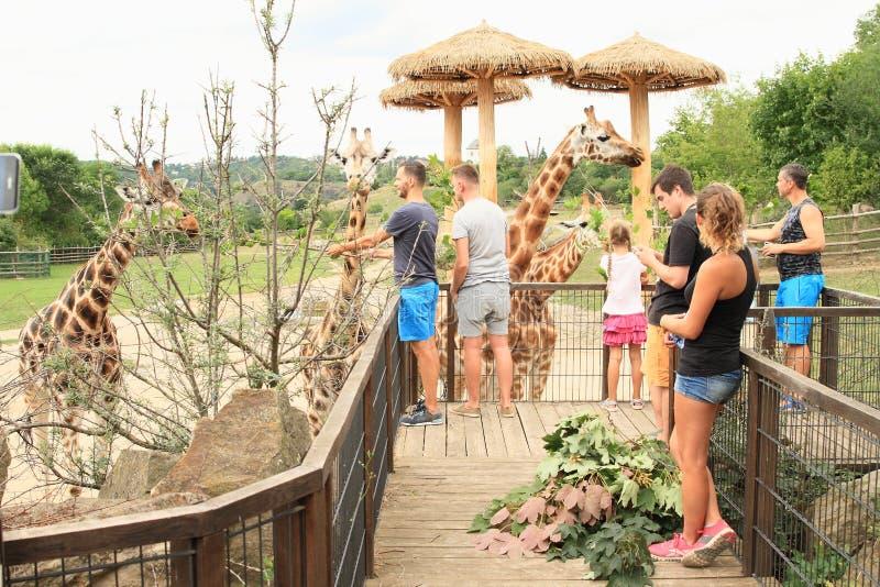 Turister som matar giraff arkivbild