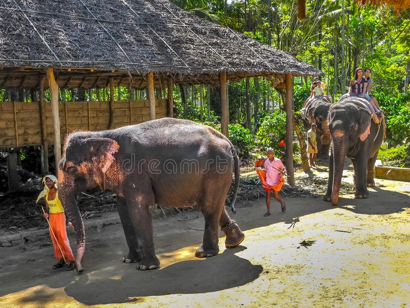 Turister som tycker om elefantritt på elefant royaltyfri fotografi