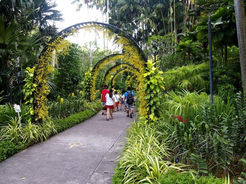 Turister strosar inom de Singapore botaniska trädgårdarna i Singapore arkivfoto