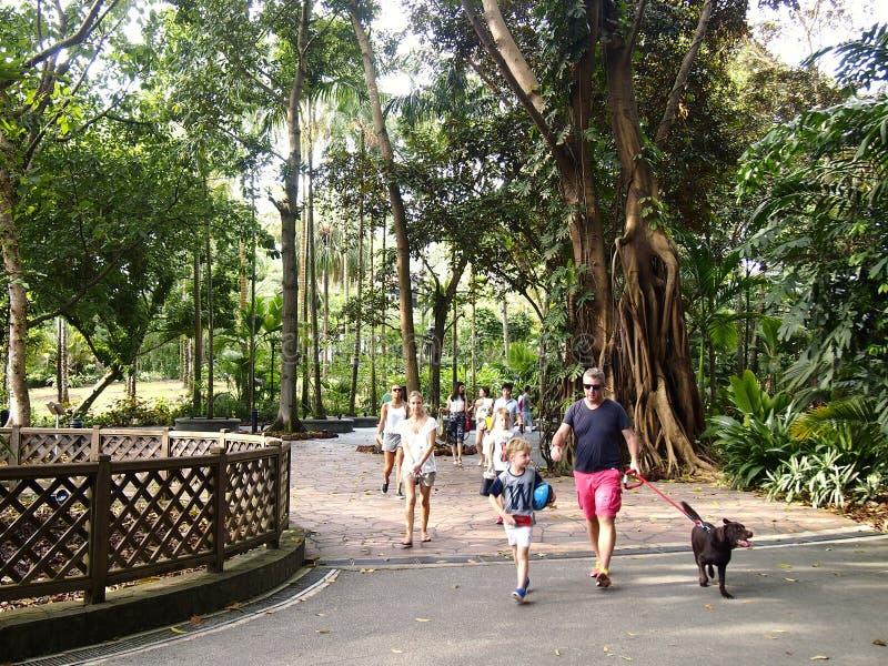 Turister strosar inom de Singapore botaniska trädgårdarna i Singapore arkivbild