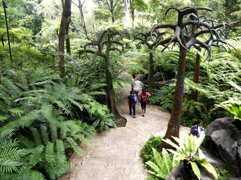 Turister strosar inom de Singapore botaniska trädgårdarna i Singapore fotografering för bildbyråer
