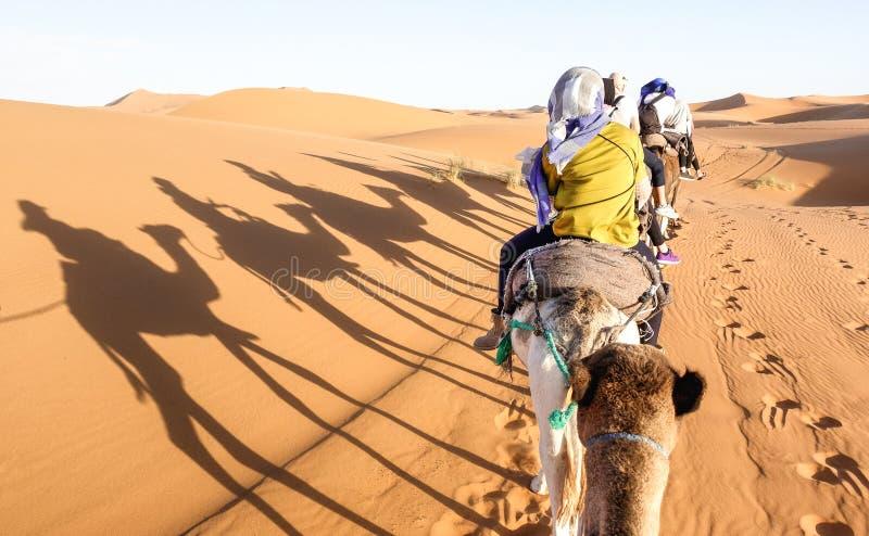 Turisthusvagn som rider dromedar till och med sanddyn i den Sahara öknen nära Merzuga i Marocko - reslustloppbegrepp arkivbild