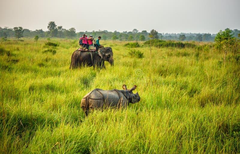 Turisti che guardano un rinoceronte da un elefante nel Nepal fotografie stock libere da diritti