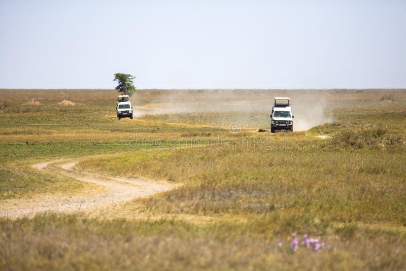 Turisti di safari sull'azionamento del gioco in Serengeti immagini stock