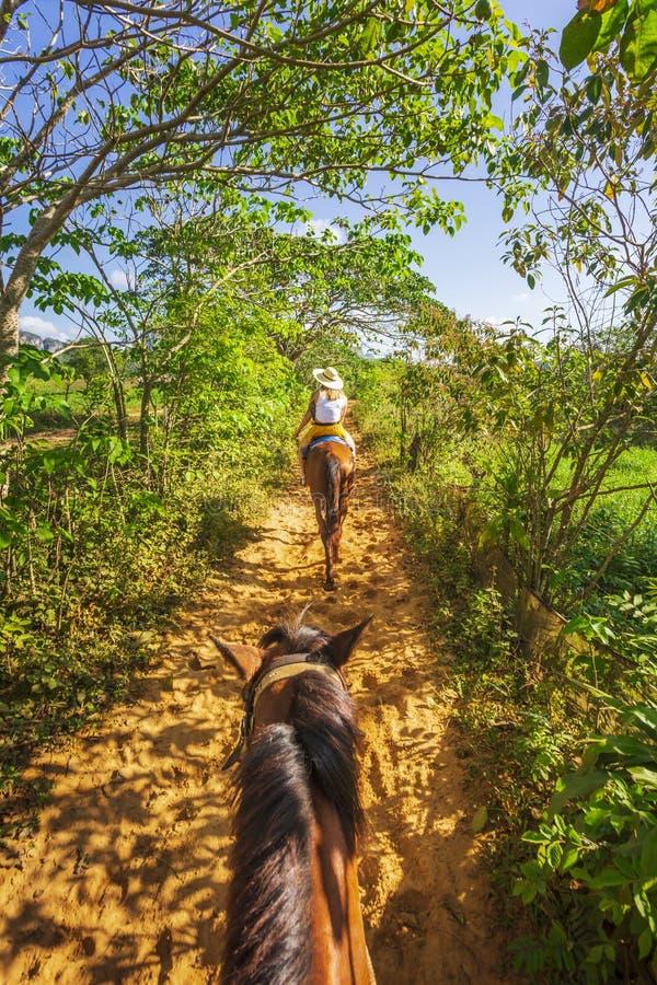 Turisti durante un giro del cavallo nel parco nazionale di Vinales, Unesco, Pinar del Rio Province, Cuba fotografia stock libera da diritti