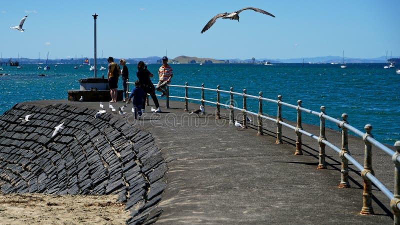 Turisti e gabbiani che godono di un giorno soleggiato alla spiaggia a Devonport, Auckland, Nuova Zelanda immagini stock libere da diritti