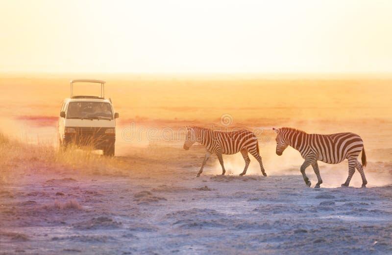 Turisti in jeep di safari che prende le foto delle zebre immagine stock libera da diritti