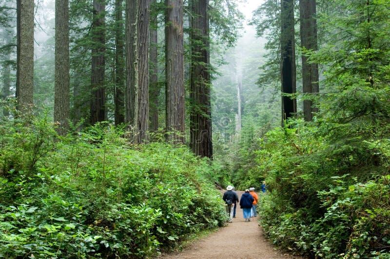 Turisti in Redwoods fotografia stock