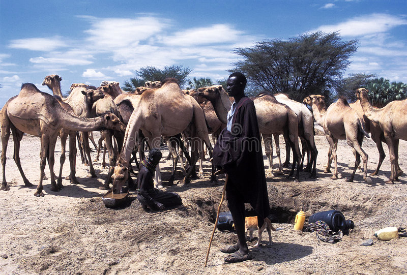 Turkana shepherd. A shepherd of the Turkana tribe Kenya with camels. The Turkana are a Nilotic people of Kenya, numbering about 340,000. They inhabit the Turkana royalty free stock photo