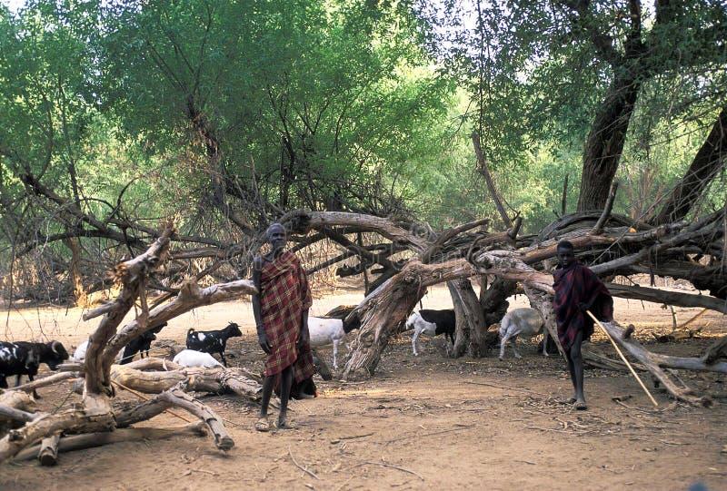 Turkana shepherds. Two shepherds of the Turkana tribe Kenya. The Turkana are a Nilotic people of Kenya, numbering about 340,000. They inhabit the Turkana stock photos