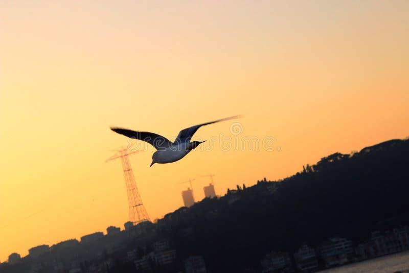 Turkay伊斯坦布尔博斯普鲁斯海峡鸟日落 库存图片