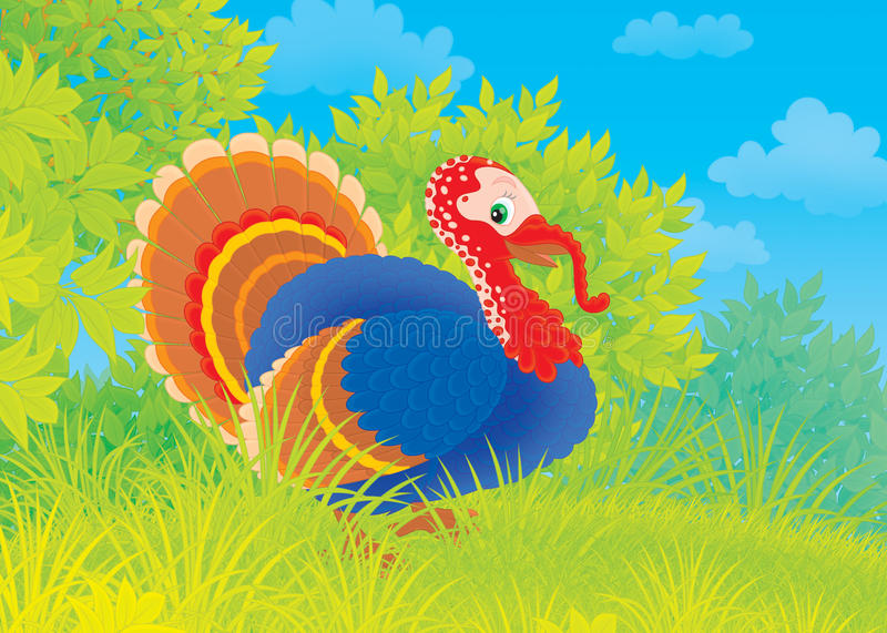 Download Turkey stock illustration. Image of animal, turkey, drawing - 28160722