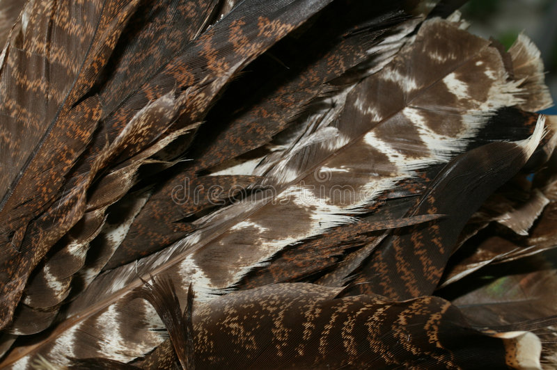 Turkey feathers royalty free stock image