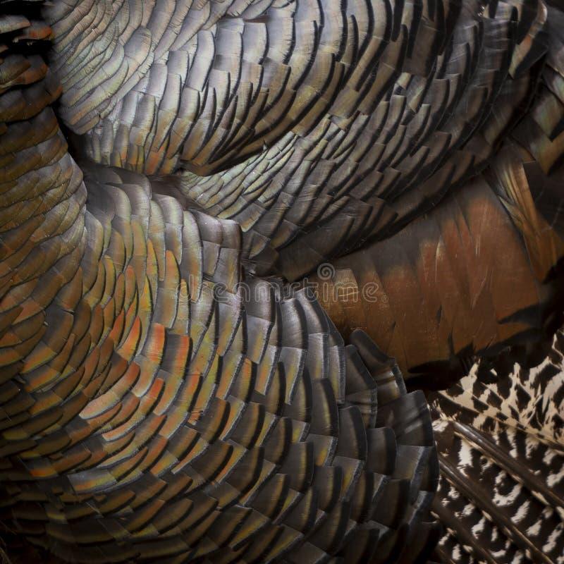 Turkey Feathers Background stock images