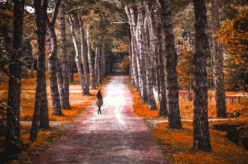 Turkey istanbul autumn colors forest stock photos