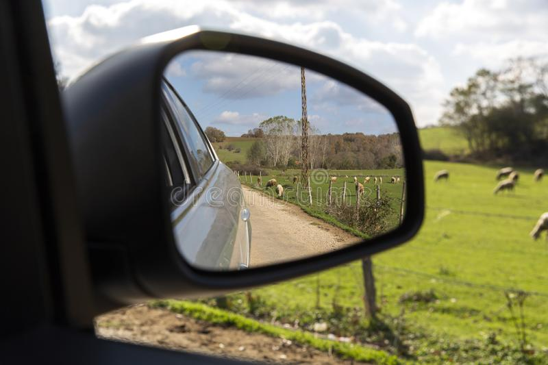 Turkey sheep grazing on a sunny day in November in nature and Kirklareli in photographs taken from the car mirror.  royalty free stock photo