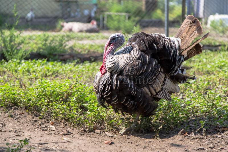 Download Turkey Stock Photography - Image: 33129742