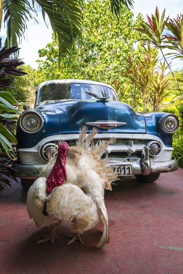 Turkiet och tappningbil i Cienfuegos arkivbilder