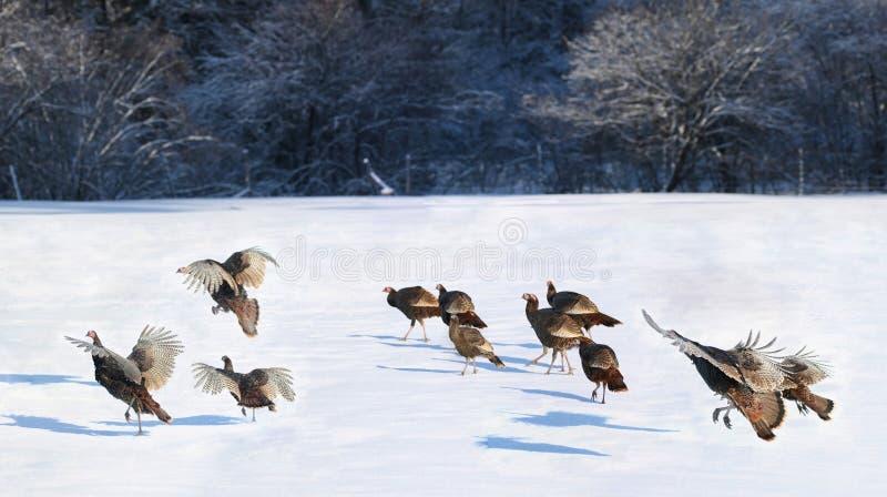 Turkiet under vinter royaltyfri fotografi