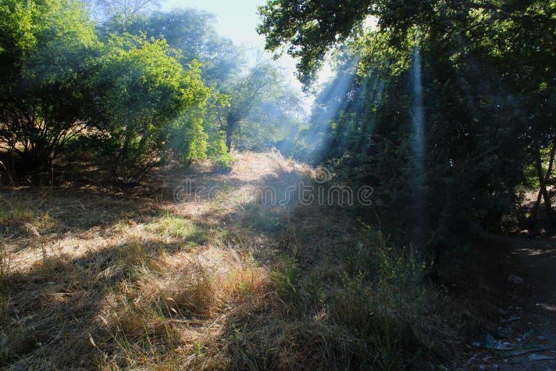 Turkiskt Adiyaman, 30 Juni, - 2019: Område för Ciplak Babapicknick och härliga landskap arkivbilder