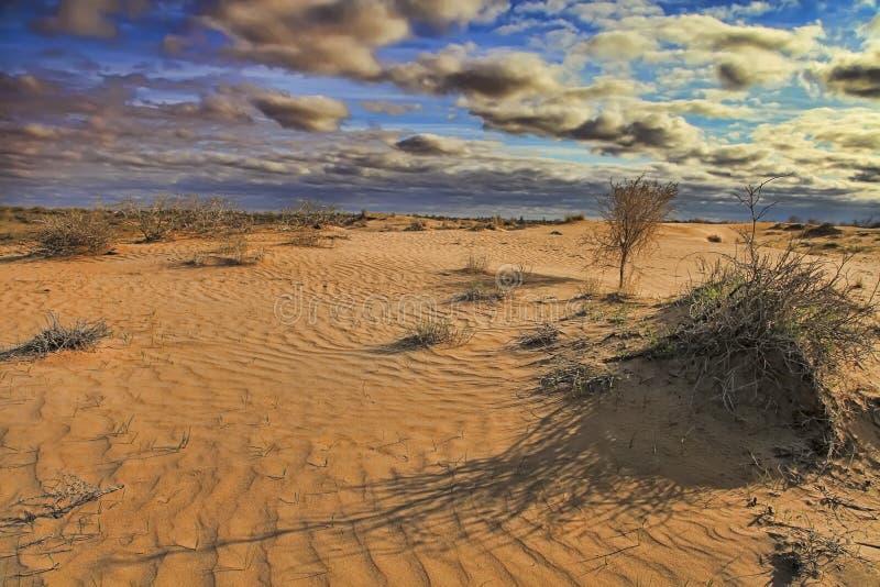 Turkménistan Désert de Karakum au printemps Le paysage du désert d'Asie centrale photographie stock libre de droits