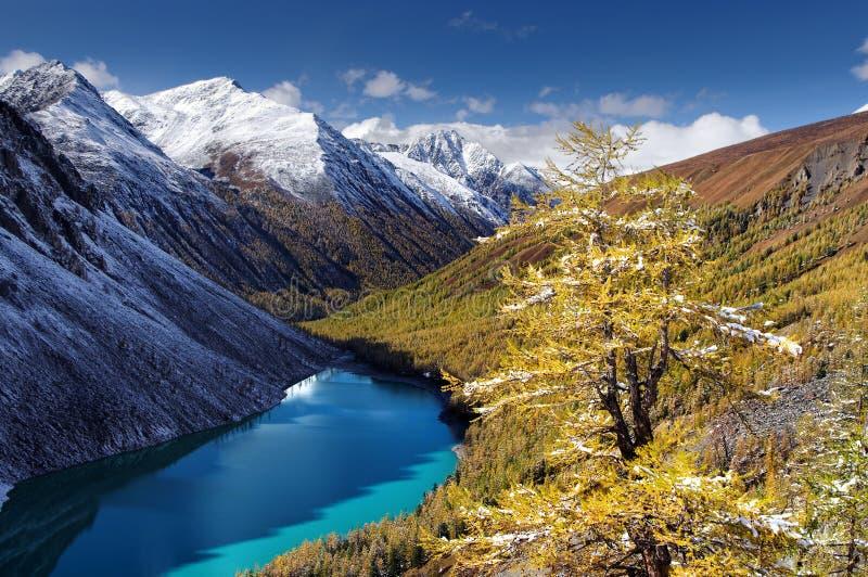 Turkoois meer onder snowcapped bergen en gele lariks stock fotografie