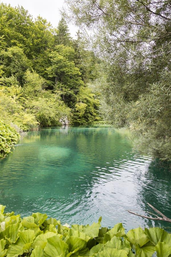 Turkoois meer in Plitvice-Meren Nationaal Park in de zomer stock foto