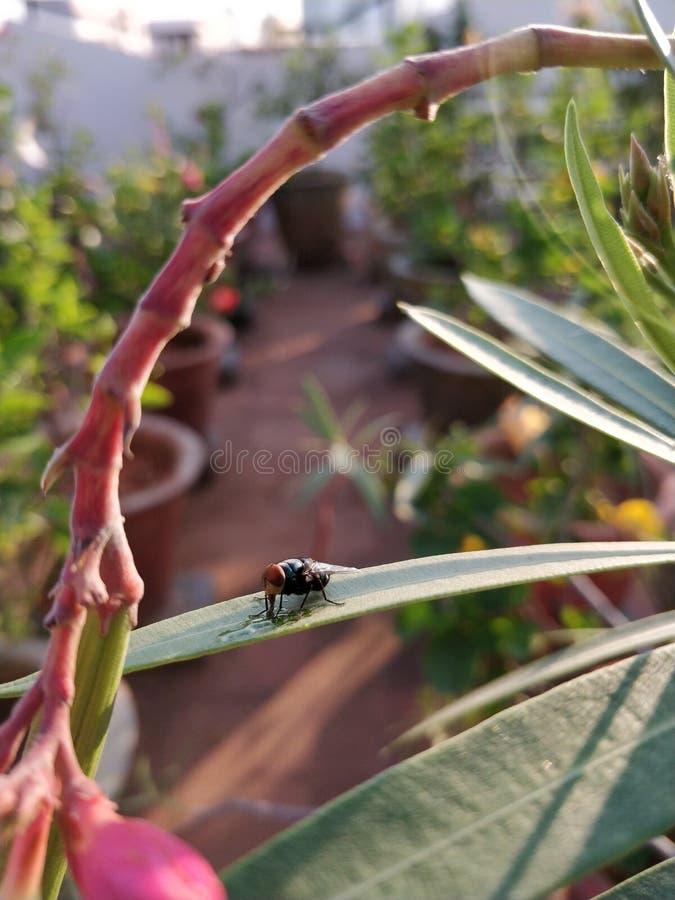 Turkos färgad fluga arkivfoto