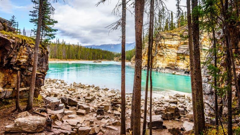 Turkosen färgade vatten av den Athabasca floden fotografering för bildbyråer