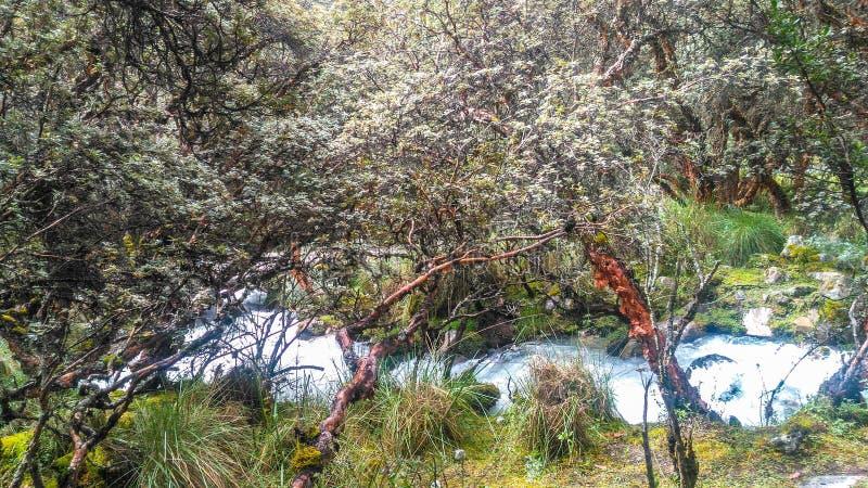 Turkusowy jeziorny Laguna 69 lokalizować w Białym Cordillera w Peru obrazy royalty free