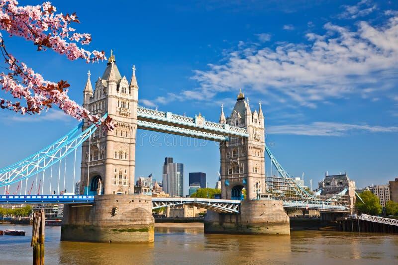 Turmbrücke in London am Frühling stockfotografie